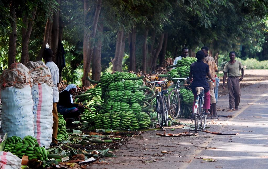Tanzanie pays de la banane _John Williams