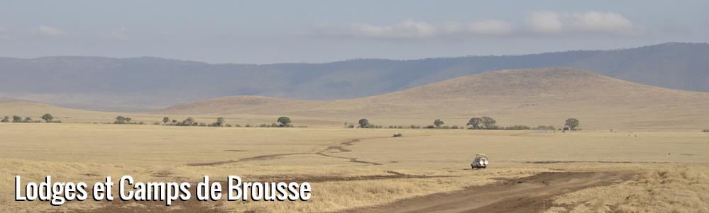 Escapade Féline en Tanzanie