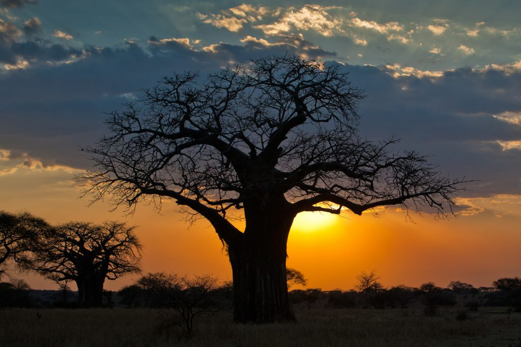 Baobab sunset by Mike Price