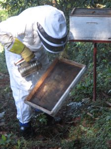 Simon beekeeper