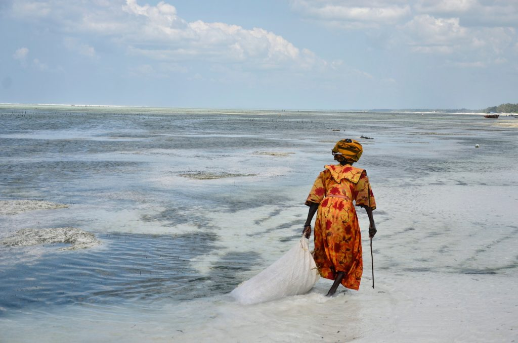 Woman collecting algae, Zanzibar by Nathalie Pigache