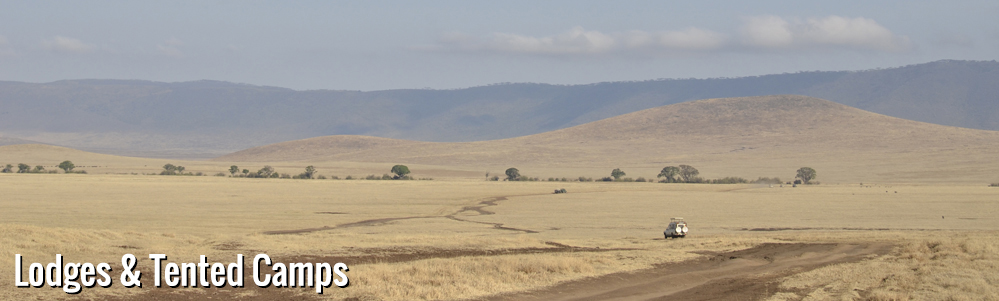 Tanzania safariscape