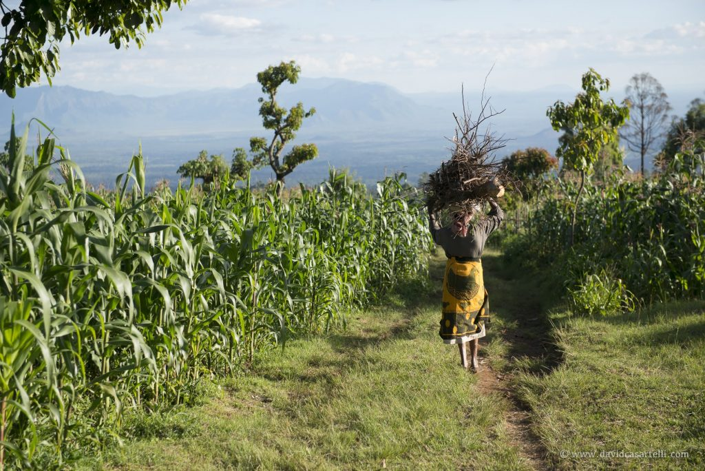 Chagga and Agriculture