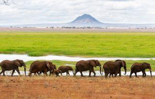 Elephant in Tarangire Steve Reinhardt credit